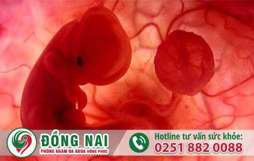 Xử Lý Thai 3 Tuần Tuổi Không Ảnh Hưởng Đến Sinh Sản